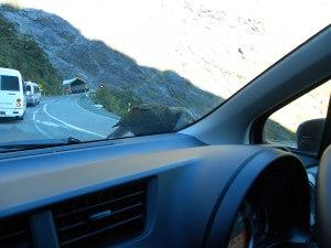 Kea in Fjordland National Park